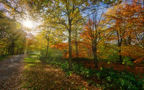 Picture autumn, forest, leaves, the sun, rays, light, trees, branches, bright, Park, track, alley, falling leaves, …