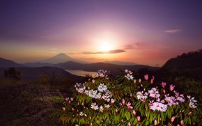 Picture the sky, the sun, light, landscape, sunset, flowers, mountains, hills, Bush, mountain, the evening, the …