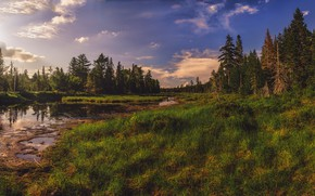 Picture forest, summer, grass, clouds, pond, blue, shore, swamp, the evening, ate, river, pond