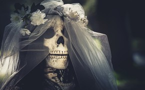 Picture skull, the bride, veil