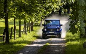 Picture blue, movement, vegetation, Mercedes-Benz, dust, SUV, G-Class, 2019