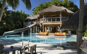 Picture palm trees, Villa, pool, The Maldives, terrace, Maldives, Soneva Fushi