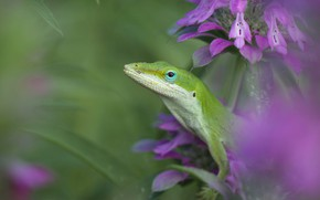 Picture macro, flowers, background, blur, lizard, pink, green, reptile