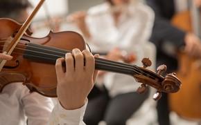 Picture Violin, Musician, Strings, Оркестр