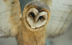 Picture owl, bird, sits