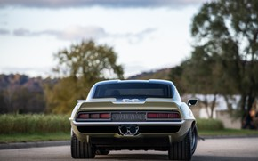 Picture Tree, Road, Chevrolet, 1969, Camaro, Chevrolet Camaro, Muscle car, Classic car, Wide Body Kit, Sports …