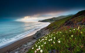 Picture landscape, nature, the ocean, coast, vegetation, CA, USA