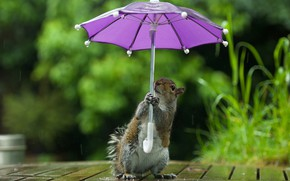 Picture greens, look, nature, umbrella, table, background, rain, lilac, Board, umbrella, protein, stand, keeps, bokeh