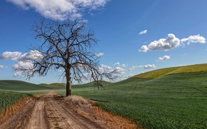 Picture road, summer, nature, tree