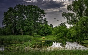 Picture summer, pond, horse