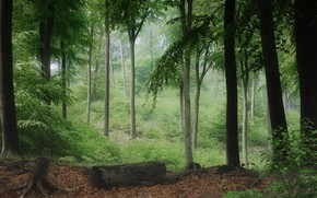 Picture forest, summer, trees, branches, fog, trunks, foliage, stump, haze, log