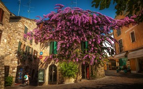 Wallpaper tree, home, Italy, Italy, flowering, street, Lombardy, Lombardy, Sirmione, Sirmione, Bougainvillea