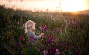 Picture field, flowers, nature, mood, morning, girl