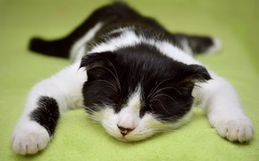 Picture cat, kitty, background, black and white, sleep, sleeping, collapsed