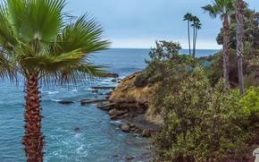 Picture sea, the sky, stones, palm trees, coast, horizon, CA, USA, Laguna Beach