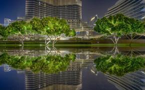 Picture trees, reflection, home, pool, Dubai, UAE