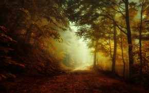 Picture road, autumn, forest, light, fog, morning