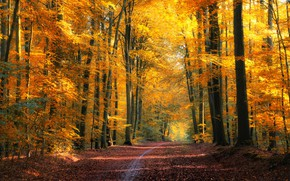 Picture road, foliage, OGP Brede, autumn, forest
