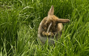 Picture nature, hare, weed
