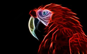 Picture parrot, ara, fractal, fractal art