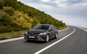 Picture vegetation, speed, slope, Toyota, sedan, Hybrid, Camry, 2019