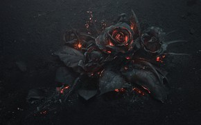 Picture ash, coal, art, ash, black roses, burned, Arsthanea