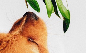 Picture face, plant, dog, nose, puppy, sniffing