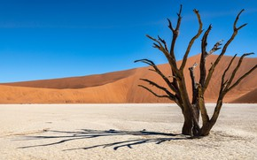 Picture hill, desert, sand, tree, Namibia, plateau Sossusvlei, driftwood, lifeless space, blue, dry, the sky, shadows, …