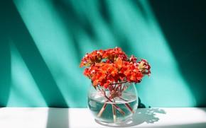 Picture flowers, shadow, bouquet, vase