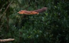 Picture flight, protein, flight, squirrel, Mark Stewart