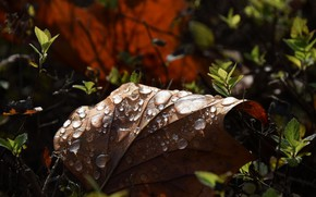 Picture autumn, leaves, drops, macro, light, nature, leaf