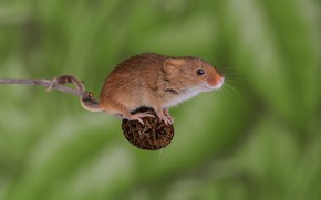 Picture background, mouse, mouse