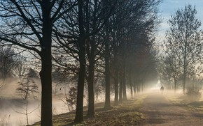 Picture autumn, trees, fog, Park, people, morning, alley, path
