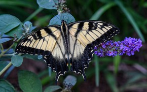Picture nature, butterfly, wings