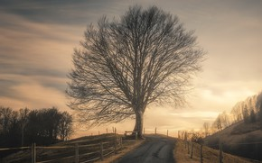 Picture road, sunset, tree, the fence