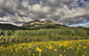 Picture flowers, mountains, meadow, yellow