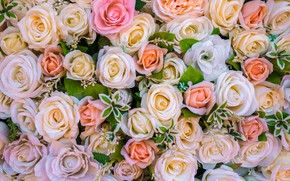Picture flowers, background, roses, buds, a lot