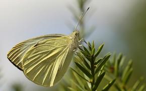 Picture bokeh, macro, butterfly