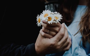 Picture girl, flowers, chamomile, hands, male