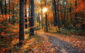 Picture autumn, forest, leaves, the sun, rays, light, trees, branches, Park, trunks, foliage, falling leaves, path, …