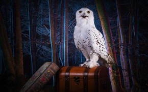 Wallpaper darkness, Hogwarts, bird, the theme, collage, trees, owl, forest, white, night, photoshop, chest, suitcase, book, ...