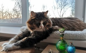 Picture cat, cat, paws, window, bottles, on the windowsill, cat