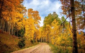Picture road, autumn, forest, nature, foliage, autumn