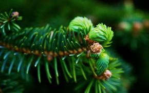 Picture macro, needles, green