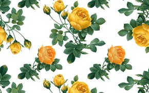 Picture background, roses, yellow, buds