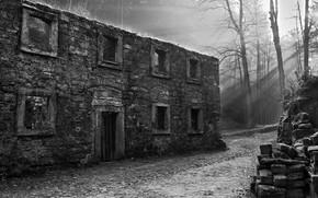 Picture trees, black & white, the building, black and white, ruins, architecture, monochrome