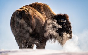 Picture stove, bison, frozen hill