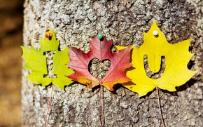 Picture autumn, leaves, love, tree, heart, colorful, love, i love you, heart, wood, autumn, leaves, romantic, ...