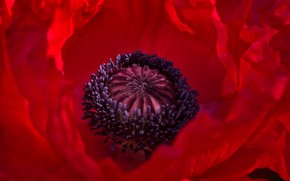Picture macro, red, Mac