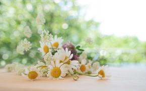 Picture summer, glare, chamomile, clover, bokeh